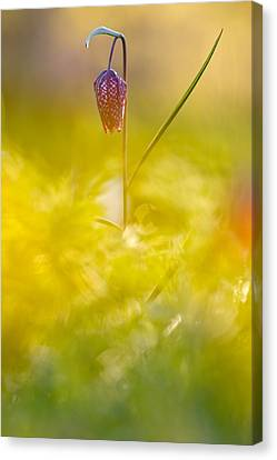 She Comes In Colours Canvas Print by Roeselien Raimond
