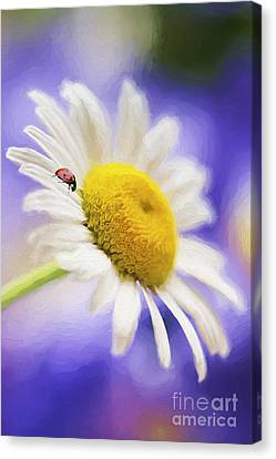 She Loves Me She Loves Me Not Canvas Print by Darren Fisher