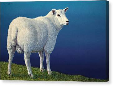 Sheep At The Edge Canvas Print by James W Johnson