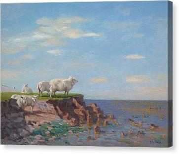 Sheep On Eroded Coast Canvas Print by Ben Rikken