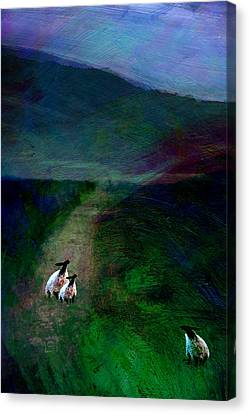 Sheep On The Moor Canvas Print by Jean Moore