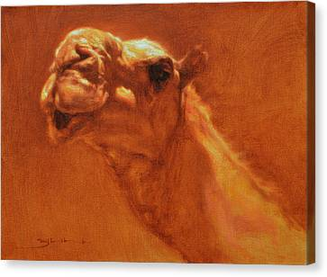 Sheikh Jamel Canvas Print by Ben Hubbard