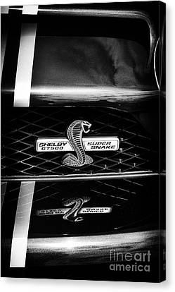 Shelby Gt 500 Super Snake Canvas Print by Tim Gainey