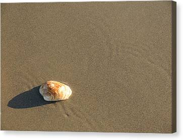 Shell And Waves Part 1 Canvas Print by Alasdair Turner