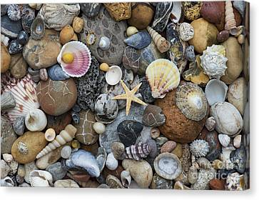 Shells And Pebbles Canvas Print by Tim Gainey