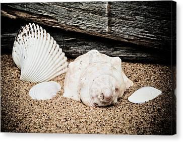 Shells On The Beach Canvas Print by David Hahn