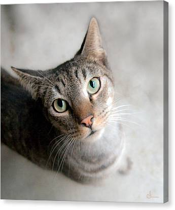 Shelter Cat Canvas Print by Sally Mitchell