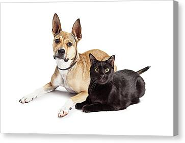 Shepherd Mix Dog And Black Cat Laying Together Canvas Print by Susan Schmitz