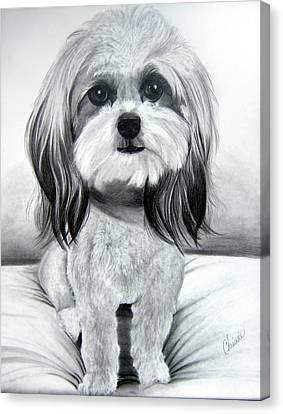 Shih Poo Graphite Canvas Print by Chrissie Leander