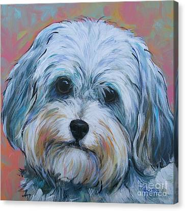 Shih Tzu Canvas Print by Vickie Fears