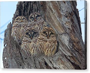Show Me Your Hooters Canvas Print by Betsy C Knapp