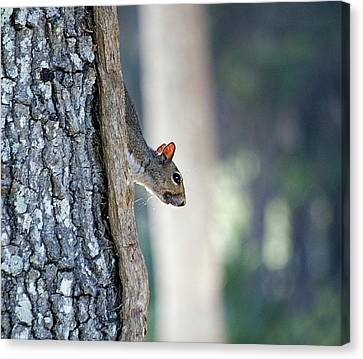 Shy Squirrel Canvas Print by Kenneth Albin