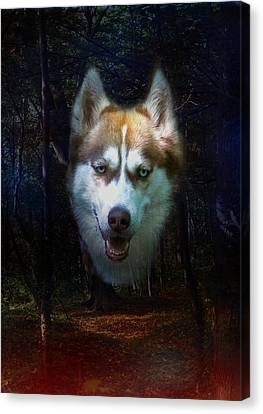 Siberian Husky Canvas Print by Brian Roscorla