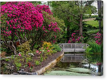 Signs Of Spring Canvas Print by Adrian Evans