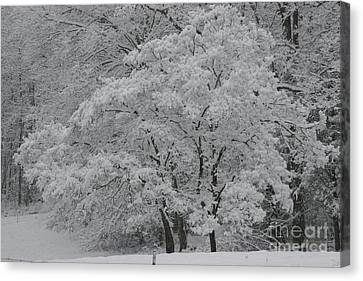 Silent White Canvas Print by Christopher Ewing