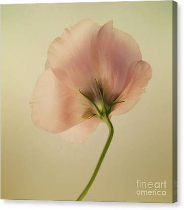 Silk Canvas Print by Priska Wettstein