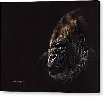 Silverback Gorilla Canvas Print by Sarah Stribbling