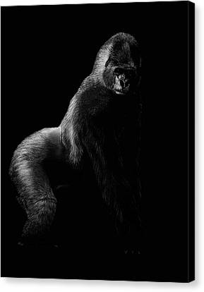 Silverback Canvas Print by Heather Ward