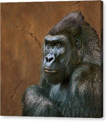 Silverback Stare - Gorilla Canvas Print by Nikolyn McDonald