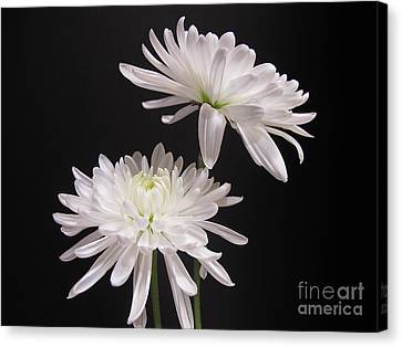 Simple Beauty Canvas Print by Kelly Holm
