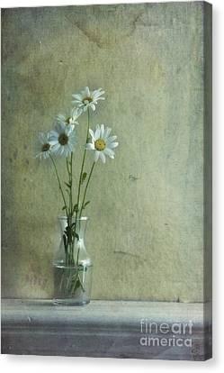 Simply Daisies Canvas Print by Priska Wettstein