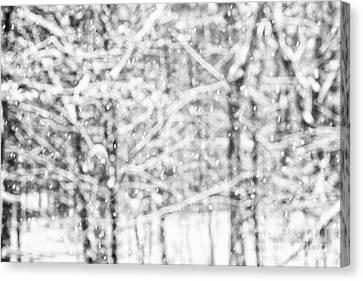 Simply Snowing Canvas Print by Sue OConnor