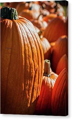 Sincere Pumpkin Patch Canvas Print by John Haldane