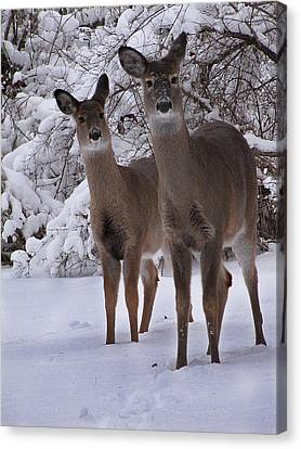 Sisters Canvas Print by Scott Hovind