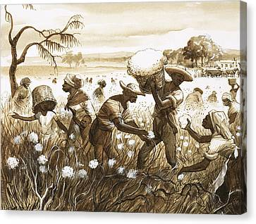 Slaves Picking Cotton Canvas Print by English School