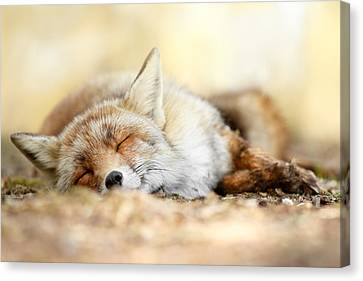 Sleeping Beauty -red Fox In Rest Canvas Print by Roeselien Raimond