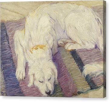 Sleeping Dog Canvas Print by Franz Marc