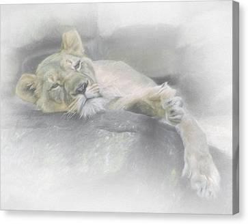Sleeping Lion Canvas Print by David and Carol Kelly