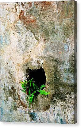 Small Ferns Canvas Print by Perry Webster