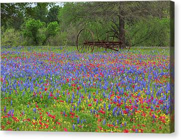Small Town Texas Wildflowers 1 Canvas Print by Rob Greebon