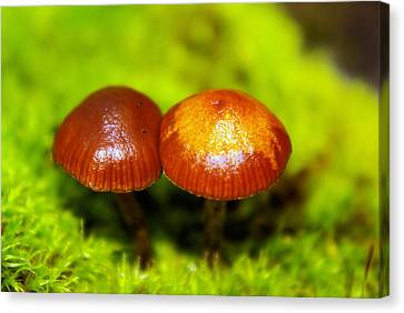 Smooching Mushrooms  Canvas Print by Jeff Swan