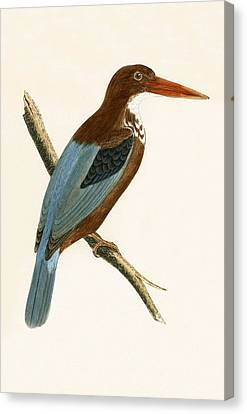 Smyrna Kingfisher Canvas Print by English School