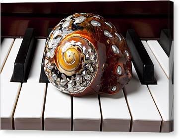 Snail Shell On Keys Canvas Print by Garry Gay
