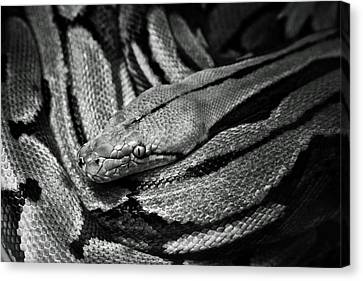 Snake Canvas Print by Fine Arts