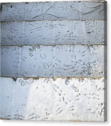 Snow Bird Tracks Canvas Print by Karen Adams