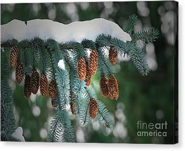 Snow Cones Canvas Print by Sharon Talson