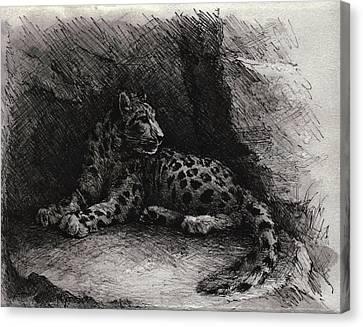 Snow Leopard Canvas Print by Rachel Christine Nowicki