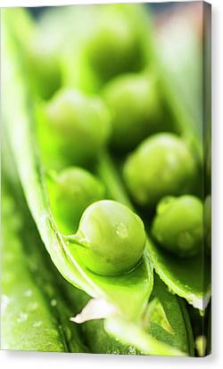 Snow Peas Or Green Peas Seeds Canvas Print by Vishwanath Bhat