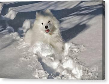 Snow Queen Canvas Print by Lois Bryan