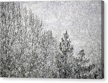 Snow Squawl Canvas Print by Laura Mountainspring