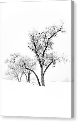 Snow Trees IIi Canvas Print by Glennis Siverson