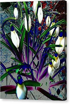 Snowdrops In Abstract  Canvas Print by Beth Akerman