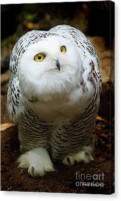 Snowy Owl Canvas Print by Jerry L Barrett