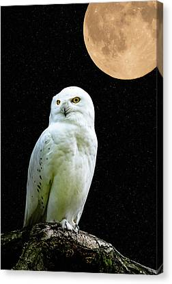 Snowy Owl Under The Moon Canvas Print by Scott Carruthers