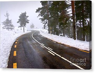 Snowy Road Canvas Print by Carlos Caetano