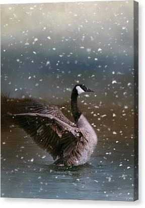 Snowy Swim Canvas Print by Jai Johnson
